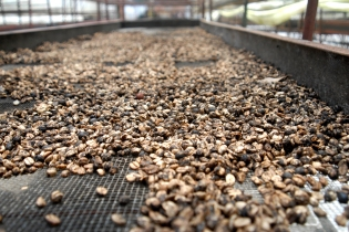 Selva Negra Coffee in Matagalpa